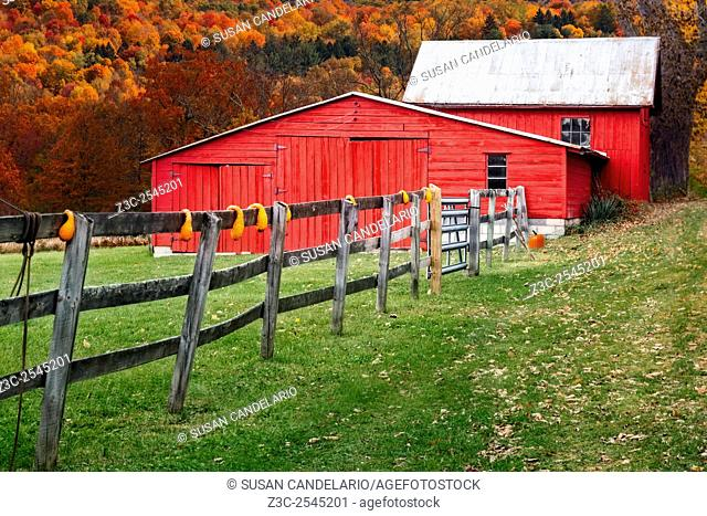 Red Barn In Autumn - Red barns with autumn decorations along a wooden fence against the peak colors of fall foliage in the Hudson Valley area of New York