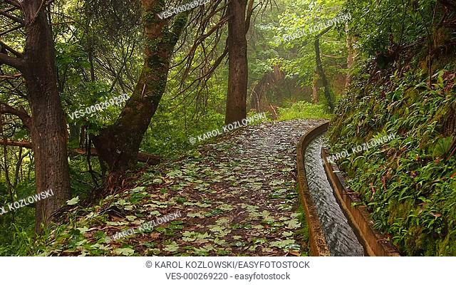 Levada Serra do Faial going from Ribeiro Frio to Portela on Madeira Island, Portugal