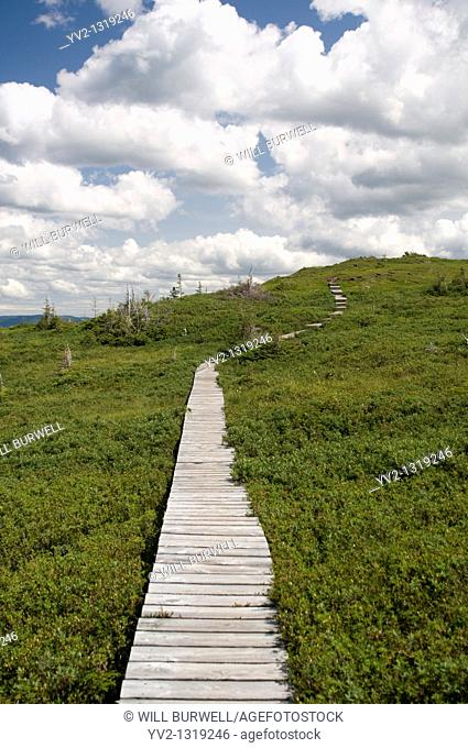 Boardwalk on the Plateau Lookout Trail Gros Moren National Park Newfoundland and Labrador
