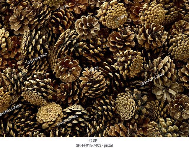 Pine cones, full frame