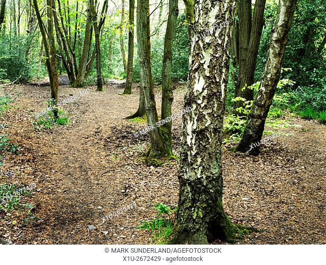 Spring Wood Nidd Gorge Woods Knaresborough North Yorkshire England