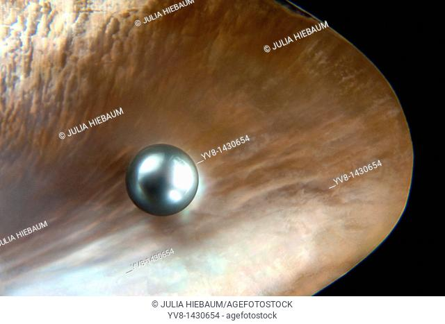Grey pearl inside shell