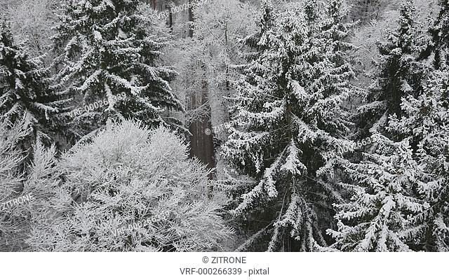 High angle shot of people jogging amidst snow covered pine trees, Burg Hohenzollern