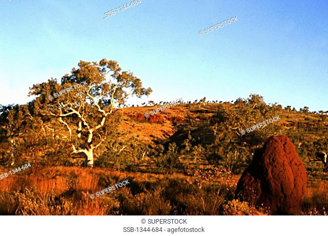 Eucalyptus tree and bushes on a landscape, Termite Mound, Karijini National Park, Western Australia, Australia