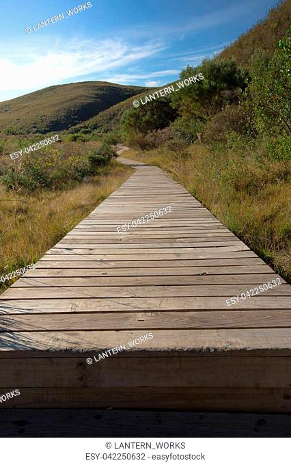 Wooden walkway through the bush