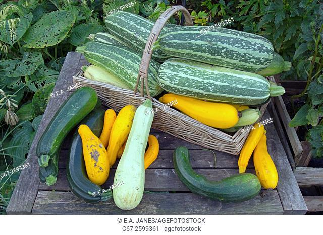 Mixed squashes on display ripe fruit in Autumn
