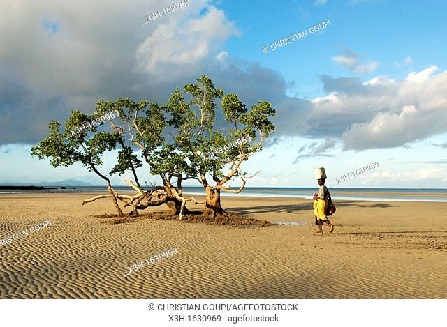 low tide on the west coast, Dzamandzar bay, Nosy Be island, Republic of Madagascar, Indian Ocean