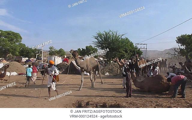 group of camels walking by at the Pushkar fair in Rajasthan, India
