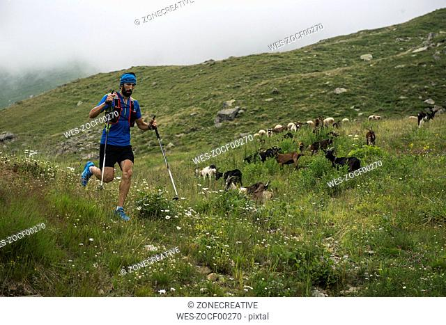 Italy, Alagna, trail runner on the move on alpine meadow