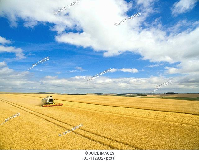 Aerial view of combine harvester in sunny golden barley field under blue sky with clouds