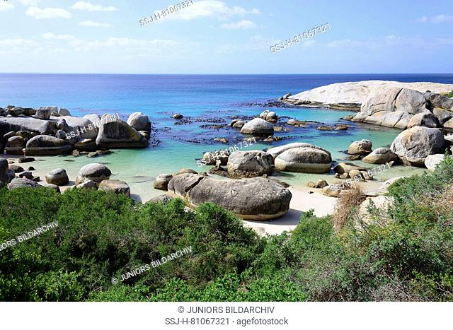 Boulders Beach near Simons Town, home of African Penguin (Spheniscus demersus) colony. False Bay, Boulders Beach, South Africa