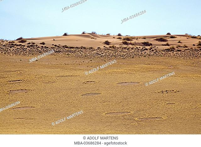 Africa, southern Africa, Namibia, Hardab region, Sossusvlei, Namib Naukluft park, fairy circles, by termites causes