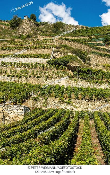 Vineyards in Uvrier, Valais, Switzerland, Uvrier
