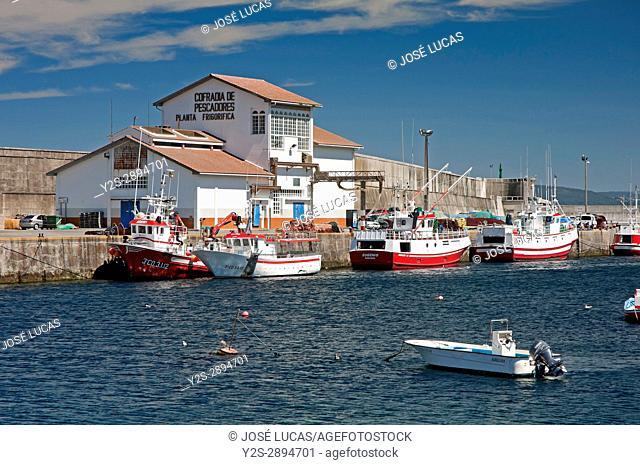 Fishing port, Malpica de Bergantinos, La Coruna province, Region of Galicia, Spain, Europe