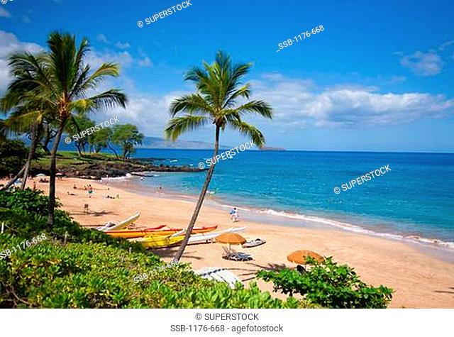 Palm trees on the beach, Maluaka Beach, Makena, Maui, Hawaii, USA