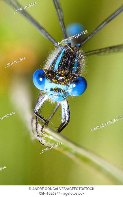 Dragonfly, Evora, Portugal