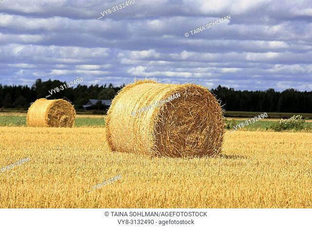 Agricultural landscape of sunlit golden straw bales on stubble field with dark cloudy sky on background