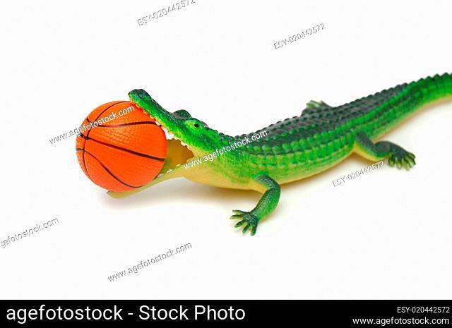 Crocodile with basketball isolated on white