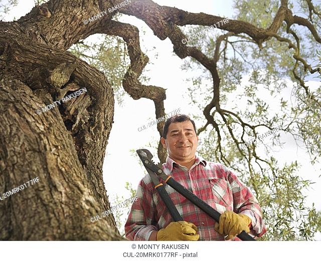 Man holding secateur next to olive tree