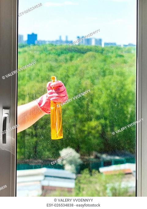 washing home window - cleaner sprays liquid from spray bottle to window glass with green park outside in sunny spring day