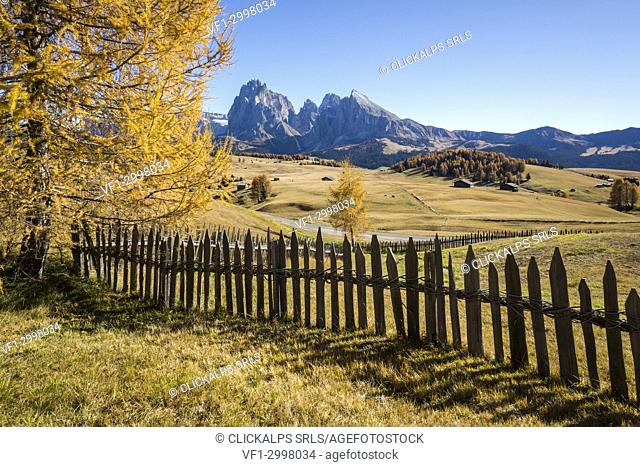 View of Sassolungo and Sassopiatto from Alpe di Siusi/Seiser Alm during autumn, Dolomites, province of Bolzano, South Tyrol, Italy