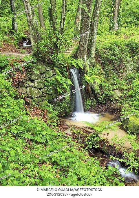 Sot de l'Obi small stream at La Nespla site, Arbucies village countryside. Montseny Natural Park. Barcelona province, Catalonia, Spain