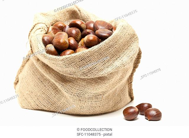 Edible chestnuts in a jute sack