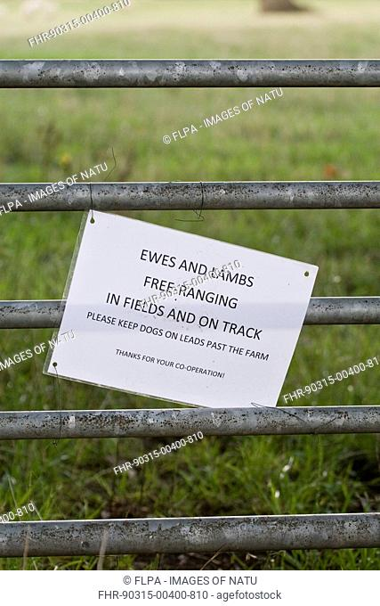 'Ewes and lambs free-ranging in fields and on track, please keep dogs on leads past the farm' sign on gate, Dorset, England, summer