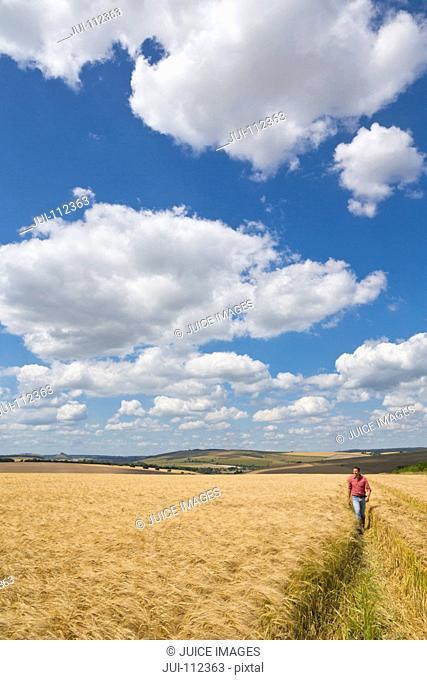 Farmer walking through sunny rural barley crop field in summer