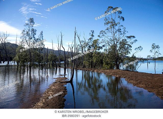 Sunken Forest, Forêt Noyée, on the Yaté Dam, Lac de Yaté, South Province, Grande Terre, New Caledonia