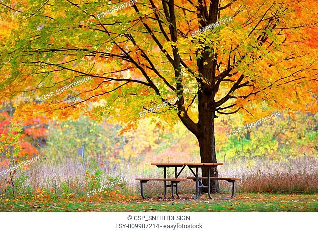 Picnic table and autumn tree