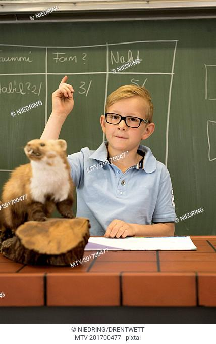 Schoolboy answering in a biology class with raised hand, Fürstenfeldbruck, Bavaria, Germany