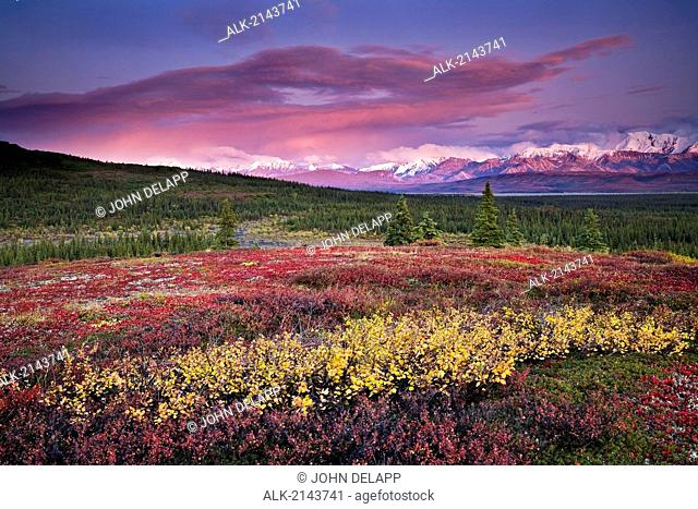 Scenic View Of Alpine Tundra With Alaska Range In The Background With Alpenglow At Sunset In Denali National Park, Alaska