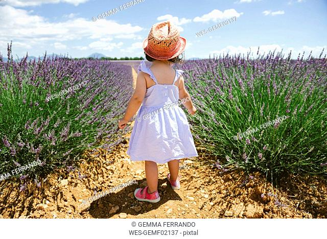 France, Provence, Valensole plateau, rear view of toddler girl standing in purple lavender fields in the summer