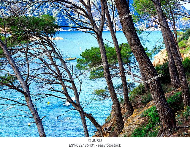 Pine trees on cliff slope above sea