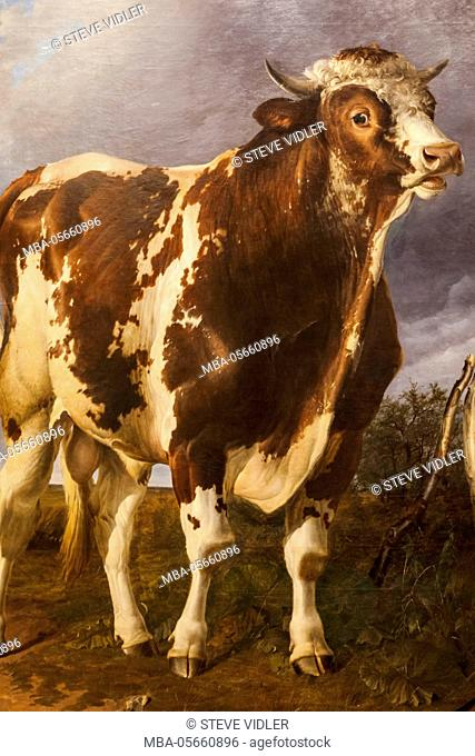 England, Kent, Cantebury, The Beaney Institute Public Library and Museum, The Garden Room Art Gallery, Painting of a Bull titled Separated