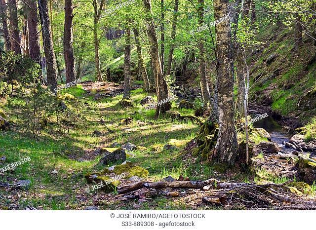 Cascadas en el arroyo del Sestil. Sierra de la Morcuera. Madrid province. Spain