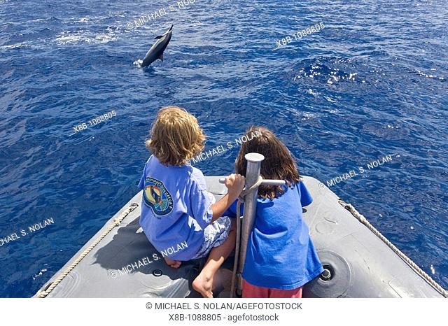 Hawaiian Spinner Dolphin Stenella longirostris spinning with young boaters off the coast of Maui, Hawaii, USA  Pacific Ocean  Spinner Dolphins occur in pelagic...