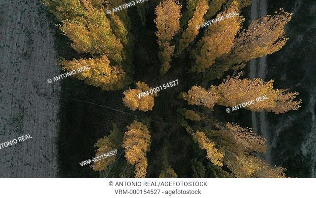 Aerial view of a forest in autun. Almansa. Albacete province