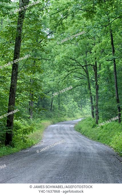 Road in Greenbrier section of Great Smoky Mountains National Park in Tennessee