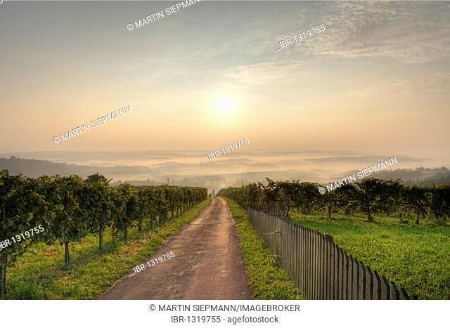 Morning mist, vineyard in Langegg near St. Stefan ob Stainz, Schilcher wine route, Styria, Austria, Europe