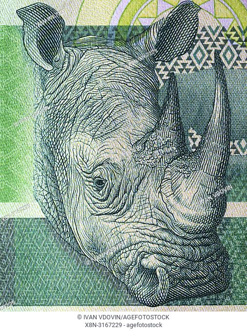 Rhinoceros from 10 rand banknote, Republic of South Africa, 2015