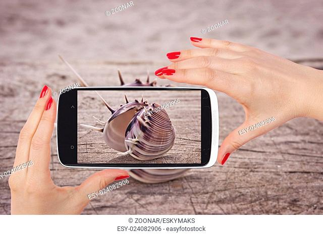 Seashell snapshot