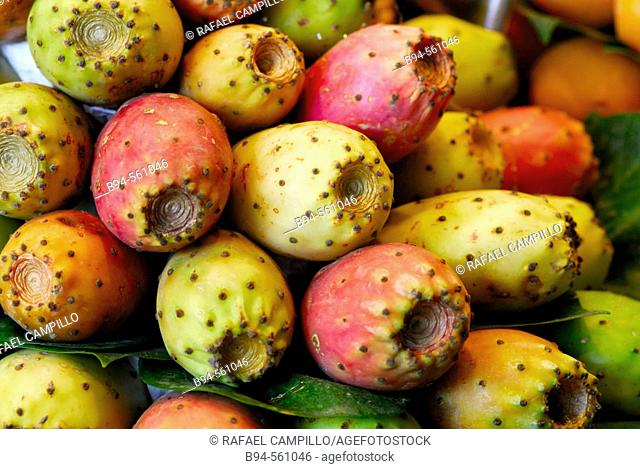 Prickly Pears. Indian Fig (Opuntia ficus-indica)