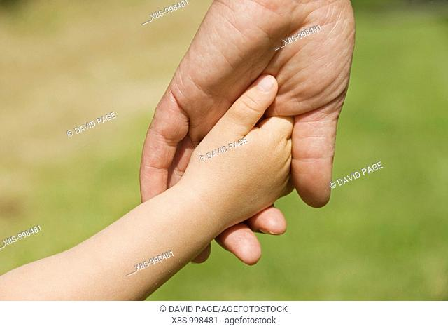 Stock photo of a young childs hand in the hand of an adult  The photo is taken in close-up