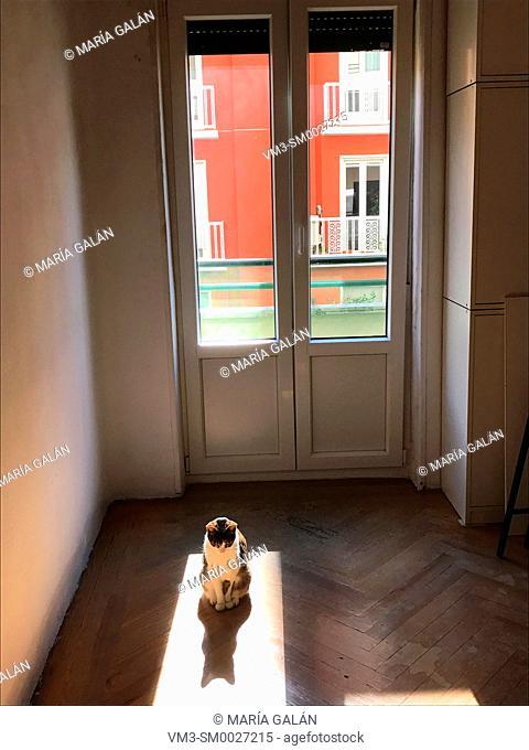 Cat sunbathing in an empty room