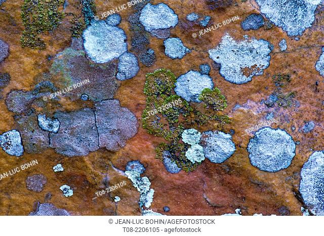 france,yvelines,chevreuse valley : rambouillet forest, moss and lichen on rocks