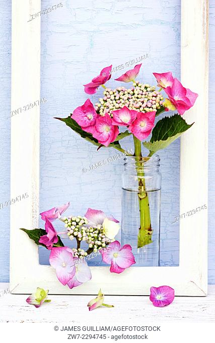 Hydrangea flowers with frame