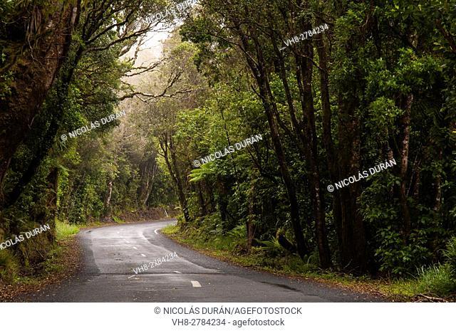 Road, Taranaki National Park, North island, New Zealand