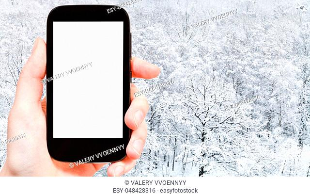 travel concept - tourist photographs of panoramic view of snow covered oak grove in city park in winter in Moscow city on smartphone with empty cutout screen...